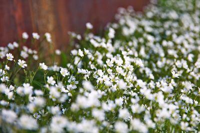 Blumen im Spreebogen