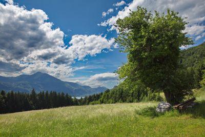 Landschaftbild mit Baum