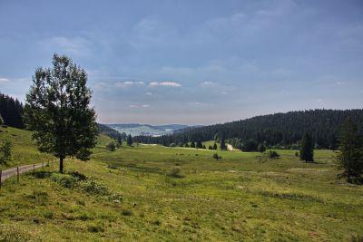 Magerwiesen