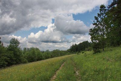 Wildwiesen